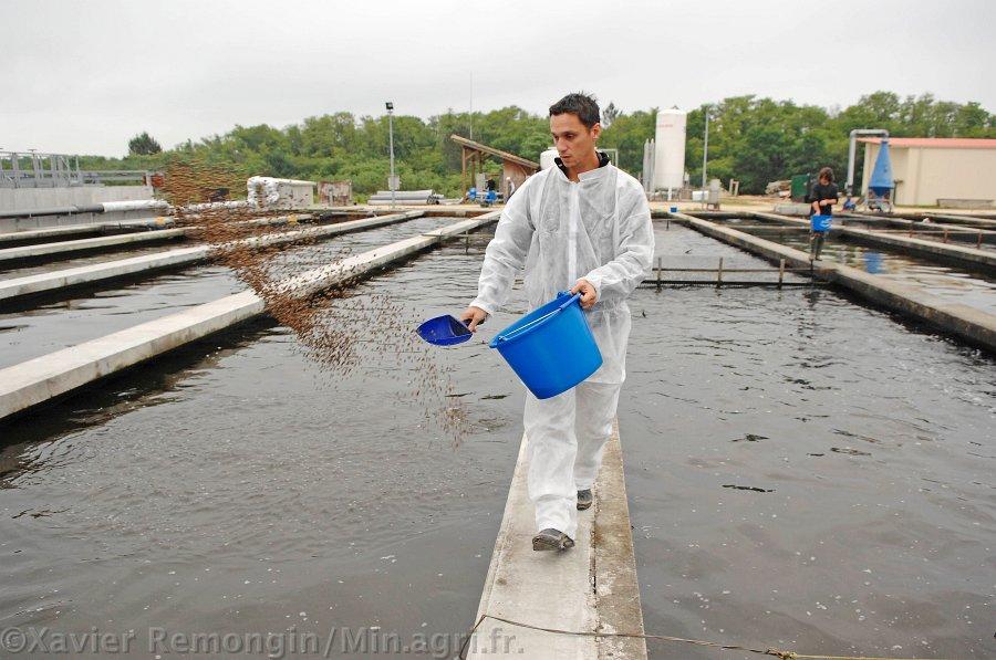 Elevage d 39 esturgeons et production de caviar en aquitaine for Alimentation poisson elevage